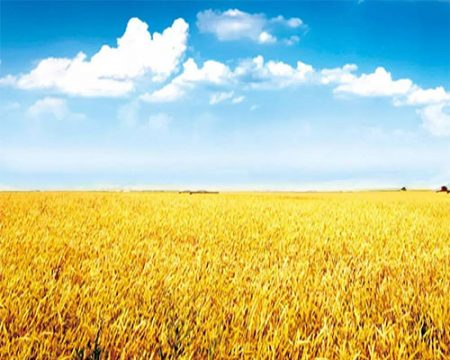 Agriculture-pic